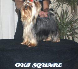 oki-square-china-doll-1