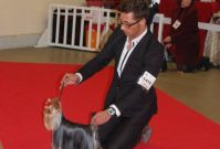 oki-square-paris-dog-show-2011