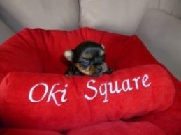 oki-square-yorkshire-toy-14