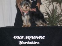 oki-square-album-yorkshire-47